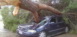 Sant'Onofrio: cade albero su macchina, ferito il conducente