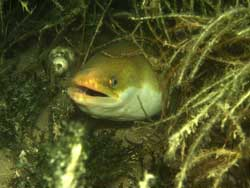 Rizziconi: pesca anguille con generatore di corrente, muore fulminato