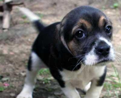 Cosenza: parte l'iniziativa dell'Amministrazione a scuola per i diritti degli animali
