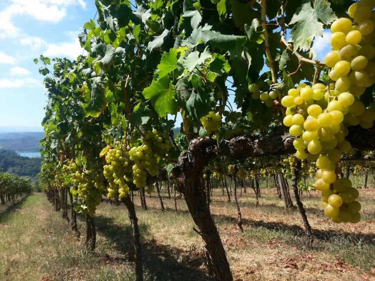 La scoperta del territorio calabrese passa dal vino