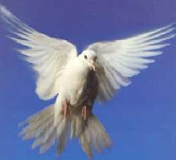 San Demetrio: per l'epifania si rinnover� il rito della colomba