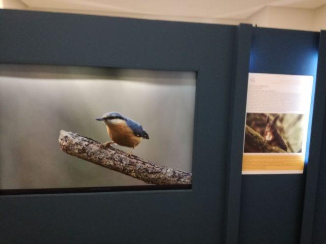Prorogata a Reggio Calabria la mostra sulla Biodiversità dell'Aspromonte