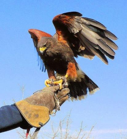 Cosenza: spettacolo di falconeria naturalistica al Castello Svevo
